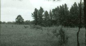 McMillan Turpentine Camp